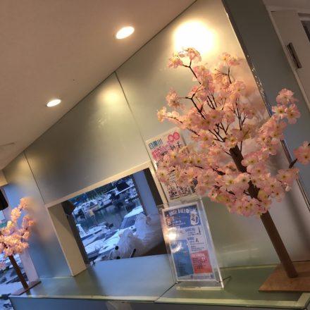 セレブリティ2号のドリンクカウンターに置かれた桜の造花