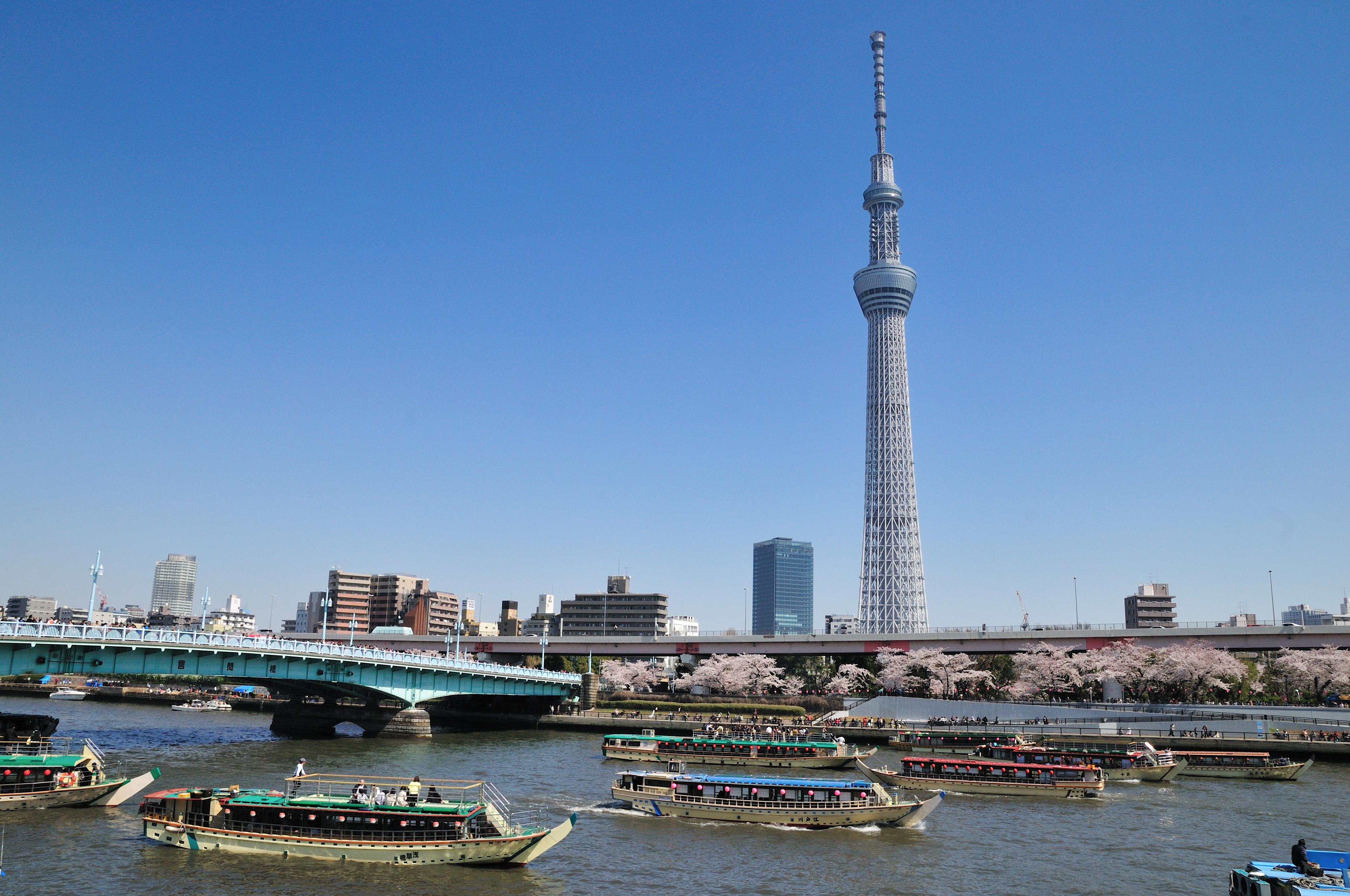 桜が咲いた春の隅田川を運行する多数の屋形船と東京スカイツリー