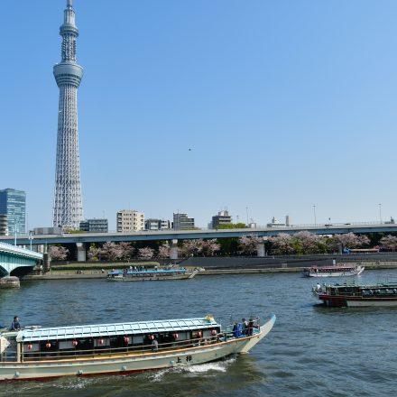 隅田川からスカイツリーを眺める屋形船の風景