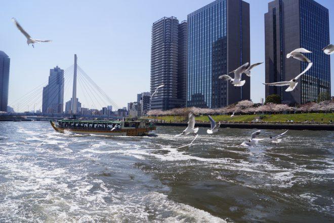 飛び交うかもめと波打つ河川を走る屋形船