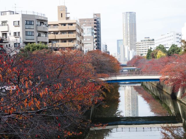 紅葉している木々と小川