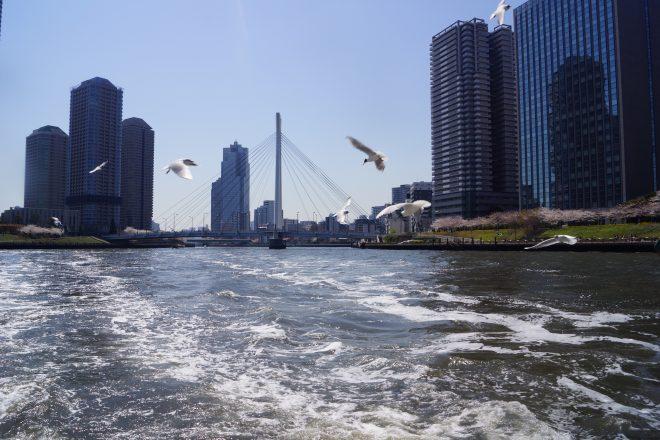 飛び交うかもめと波打つ河川
