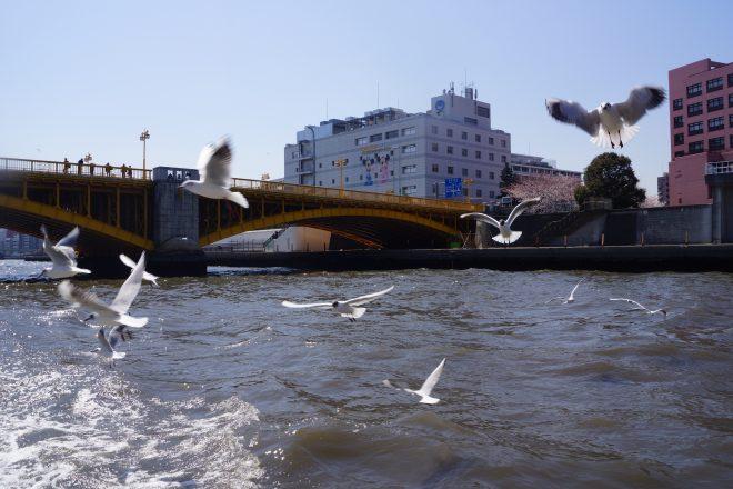 船上から見る橋と河川上を飛び交う鳥