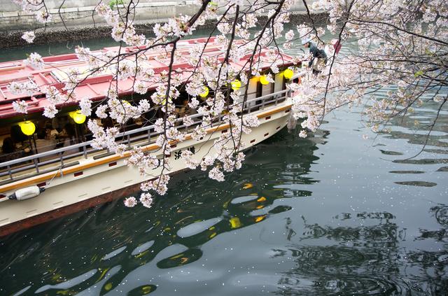 河川沿いにしなだれる桜と屋形船