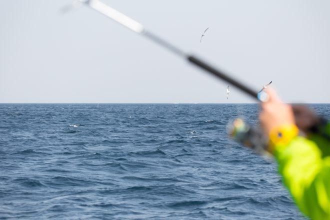海上を舞うかもめと釣りをしている風景