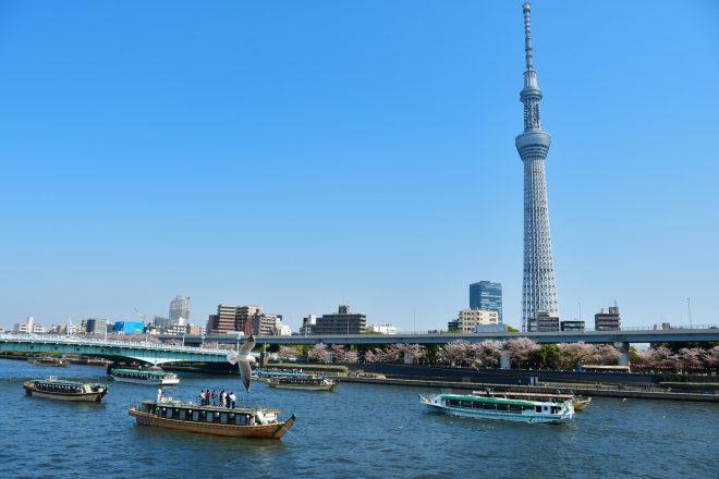 桜の咲いた隅田川を航行する多数の屋形船と東京スカイツリー