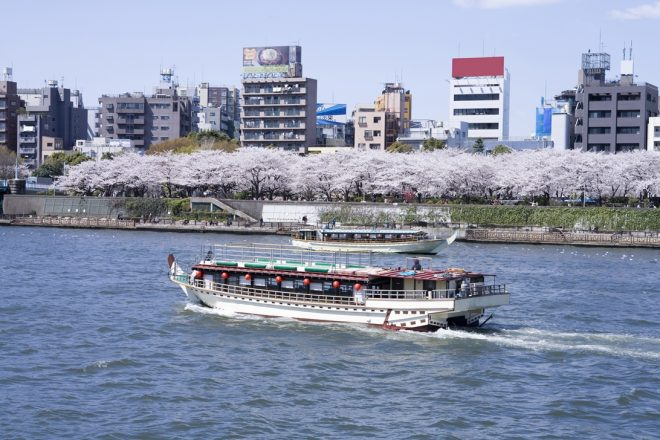 満開の桜が咲いた隅田川を登っていく2隻の屋形船