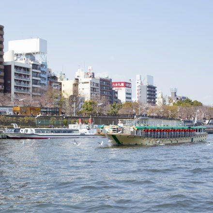 川辺の桜並木と屋形船