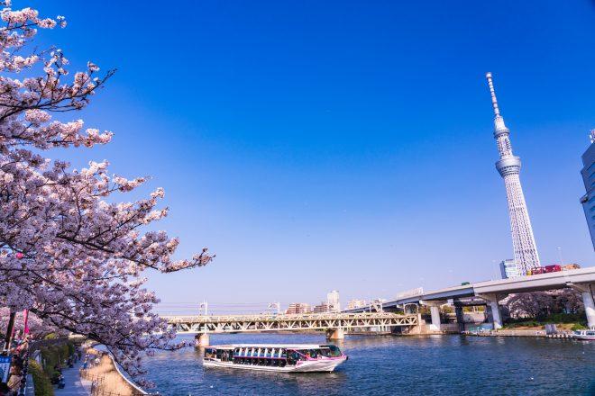 隅田川を進む船とスカイツリーや桜