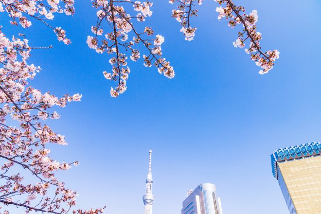 青空と桜とスカイツリー