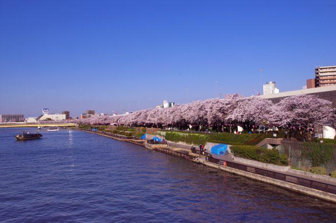 隅田川の上から見る満開の桜