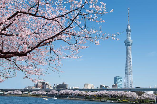 隅田川沿いの桜とスカイツリー