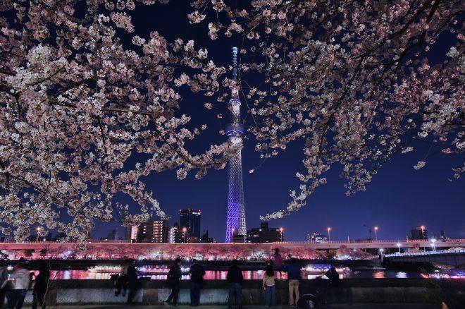 スカイツリーと桜がライトアップされたきれいな夜景