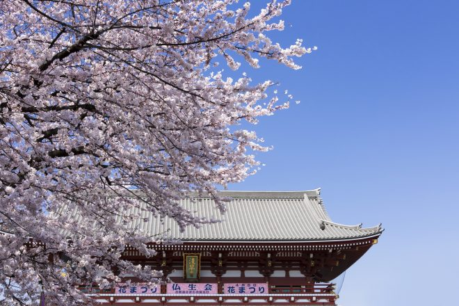 浅草寺と桜