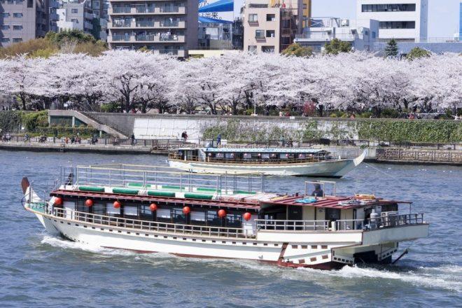 桜を背に運航している屋形船