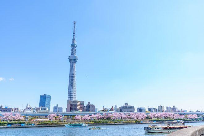隅田川の桜並木と数隻の屋形船