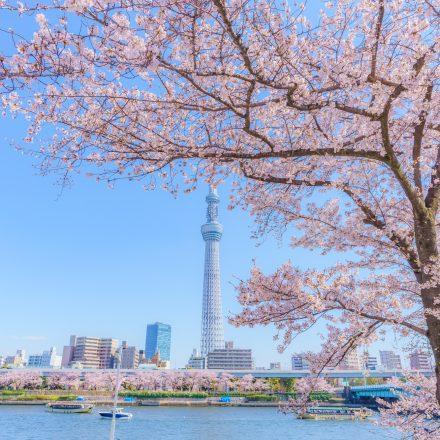 屋形船が映るスカイツリーと隅田川
